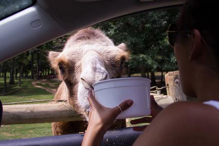 Safari In Va >> 13 Drive Through The Virginia Safari Park In Lexington Va The