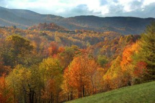 Photo of trees and mountains in the George Washington National Forest in the fall.