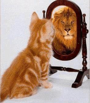 confidence-cat