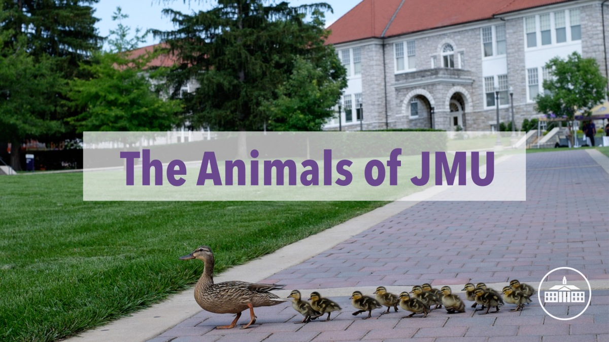 We Are The (Animals) of JMU